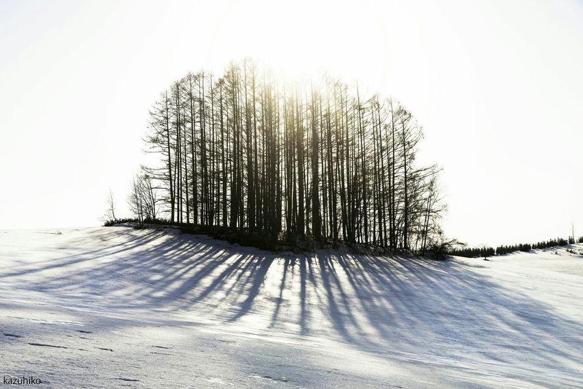 Hokkaido Japan Biei