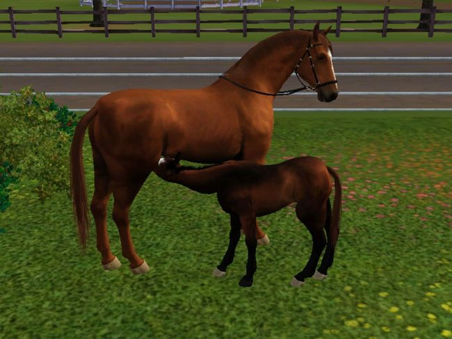 Sims3 Sims 3 Thesims3 Sims3pets fohlen + mutter sims 3