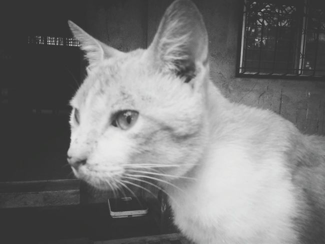 Cats Pets Samsungphotography Simple Photography 5mpcamera Blackandwhite