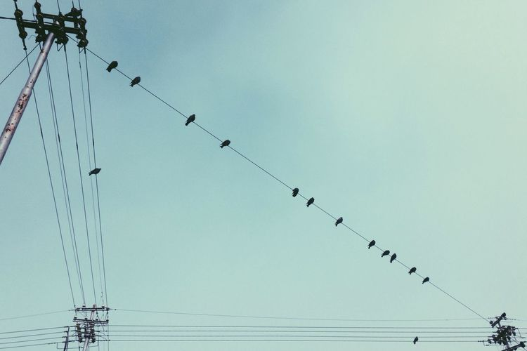 Low Angle View Of Birds Perching On Power Cables Against Clear Sky