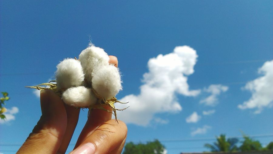 Close-up of woman holding white flower against blue sky