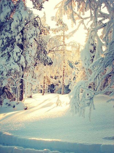 Snow Followme Enjoying Life Goodmorning