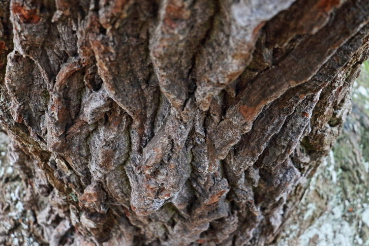 Perspectives On Nature Bark Beauty In Nature Close-up Nature Outdoors Rough Textured  Tree Tree Trunk