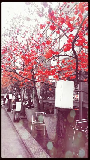 Blossom as fire. Bloosom Check This Out Strong Red Hanging Out