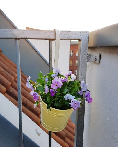 Balcony Flowers Sunshine Springtime