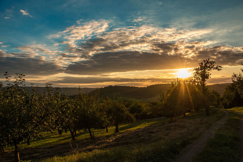 Sunset sky and fields of apple trees Agriculture Beauty In Nature Cloud - Sky Day Field Grass Growth Landscape Nature No People Outdoors Rural Scene Scenics Sky Sun Sunbeam Sunlight Sunset Tranquil Scene Tranquility Tree