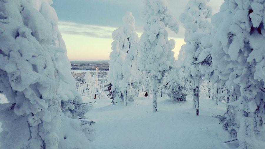 Tykkylumipuut Finland Lapland Skiing Rukatunturi Enjoying Life Hello World