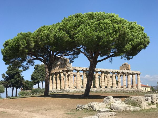 The Week On EyeEm Temple Of Athena Temple Of Ceres Paestum Italy Old Ruin Ancient History Built Structure Architecture Ancient Civilization The Past Archaeology Travel Destinations Architectural Column Tree Run-down Tourism Travel Clear Sky Arch Day Building Exterior Bad Condition Outdoors An Eye For Travel