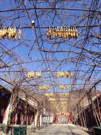 有一种蓝在北京^_^ Taking Photos Enjoying Life Hello World Happiness Spring Nice Day China