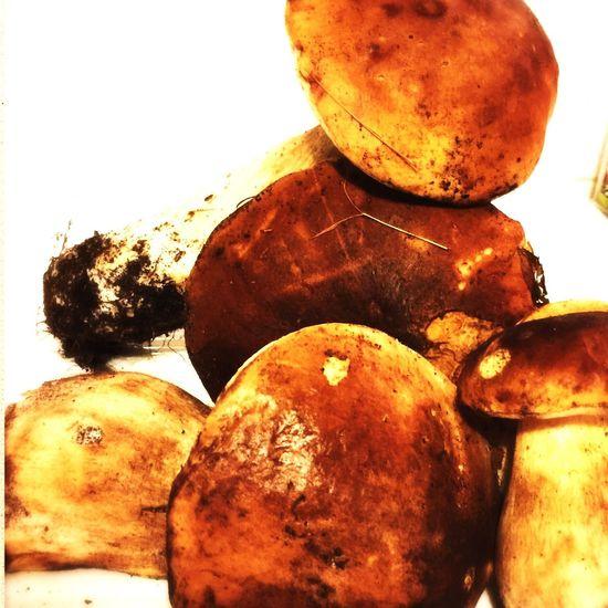 Cèpes D'Aquitaine