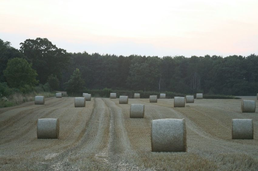 Harvest time Harvest Time Farming Streamzoofamily Hay Bales