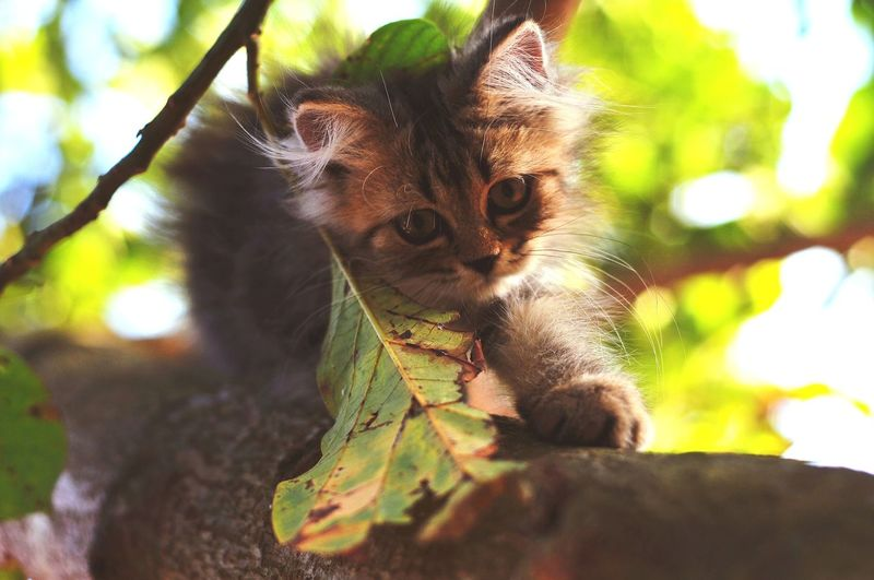 Animal Themes Persian Cat  Cat Lovers Cats Of EyeEm Kitten 🐱 Cats 🐱 Leopard Portrait Looking At Camera Tree Cute Close-up Animal Eye Feline Animal Head  Domestic Cat Yellow Eyes Kitten Whisker Cat