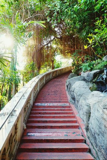 Golden Mount, Thailand The Way Up The Way Forward No People Sunlight Through Trees Steps And Staircase Red Stairs Nature Trees And Plants  Sony A6000 Teavel Destination Tourist Attraction  The Way To The Temple Bangkok