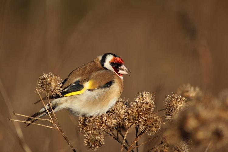 Bird perching on plants