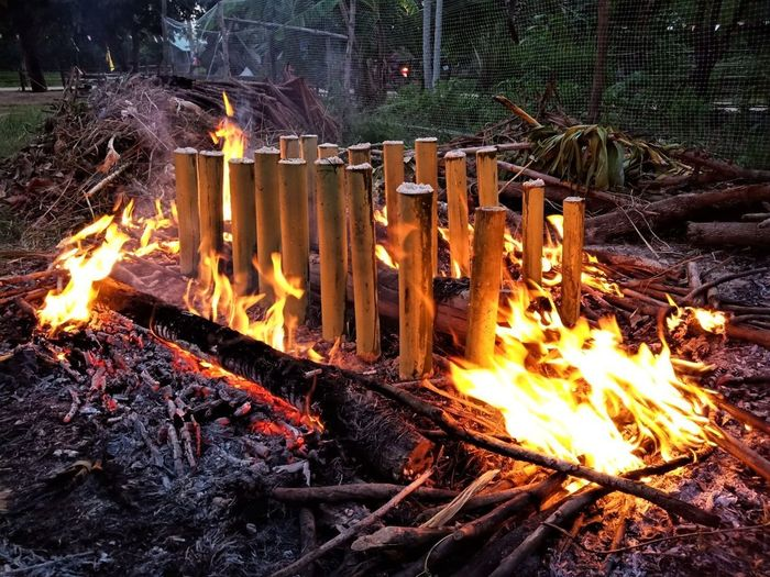 Bonfire on wooden structure in forest