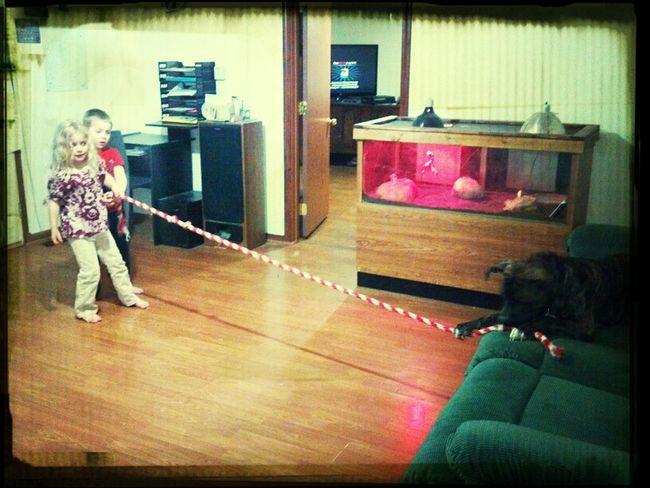 The Kid Playing Tug O War With Pongo!