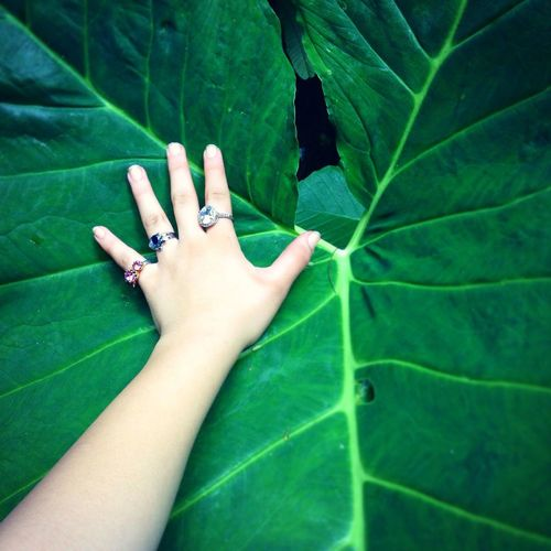 Hoja y mano. Nature EyeEm Nature Lover Vintage That's Me