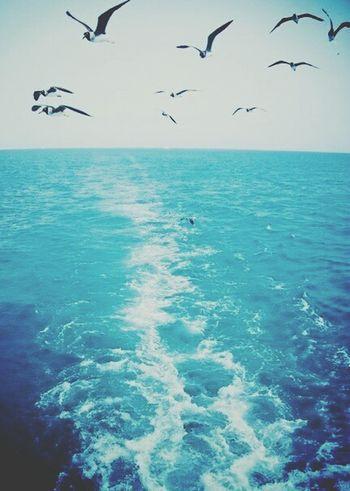 Sea Holiday Sky Relax