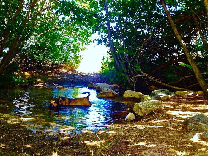 Doggy Day Spa Dogs German Shepherd Shar-pei Cute Creek Todays Hot Look Fitzhugh Summer Dogs