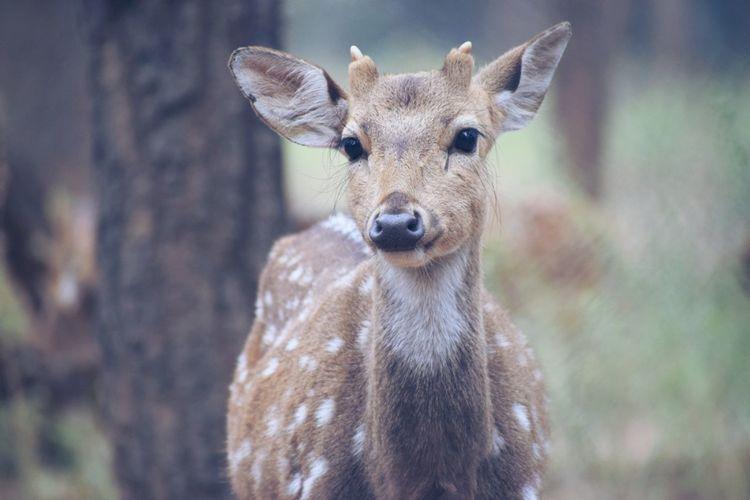 Oh deer you looks so nice of you.. deer deer looking at here