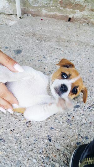 Dog❤ Pets One