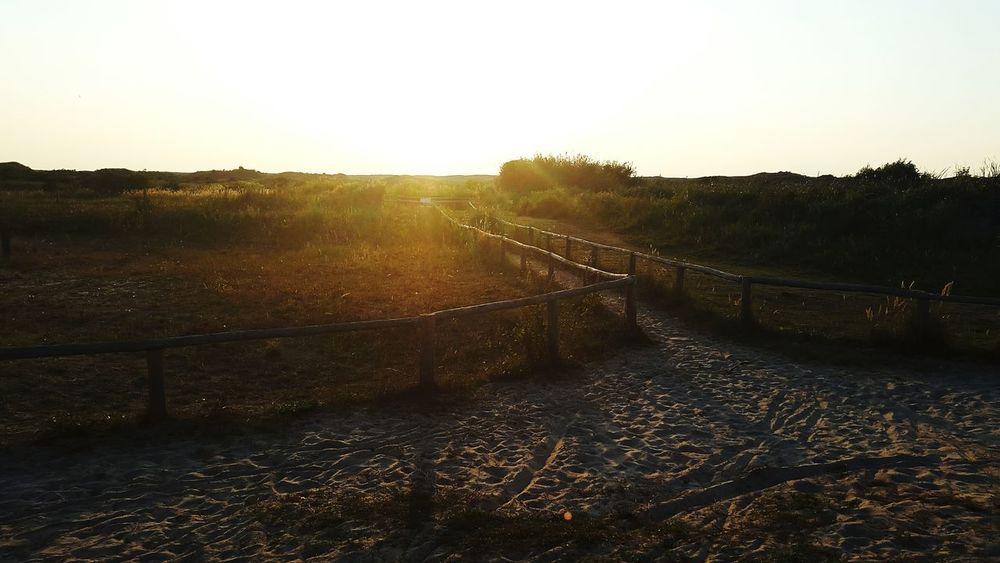 Road to tomorrow Sun Positive Happy Sand Dune Nature Summer Summertime Netherlands Beach Tomorrow Future NeverLookBack