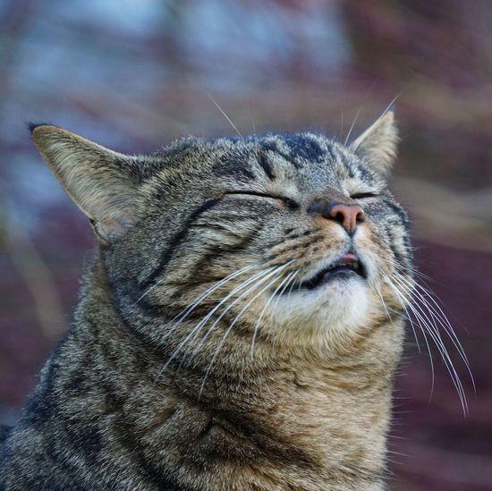 Kili Animal Animal Themes One Animal Vertebrate Cat Mammal Domestic Animals