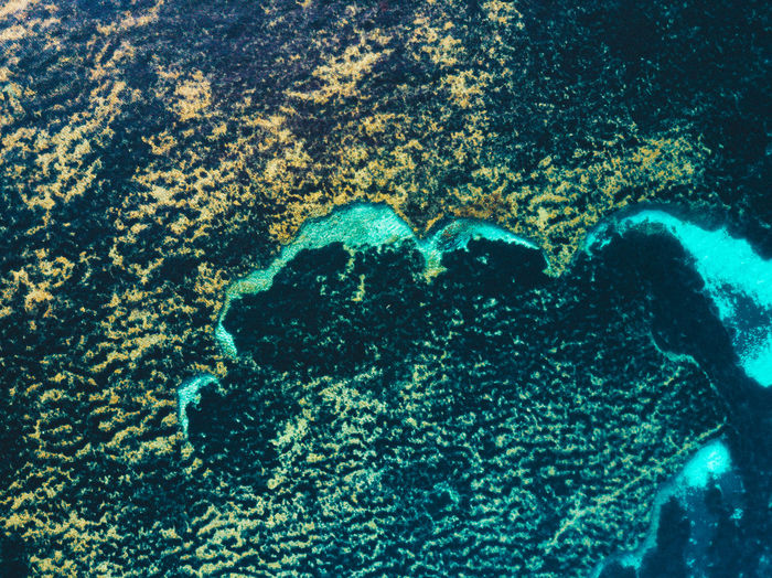 Aerial View Arial Photography Arial Shot Beauty In Nature Close-up Crystal Clear Crystal Clear Waters Day Nature No People Outdoors Sea Sea Life Surface Of The Water UnderSea Underwater View From Above Water Water Surface