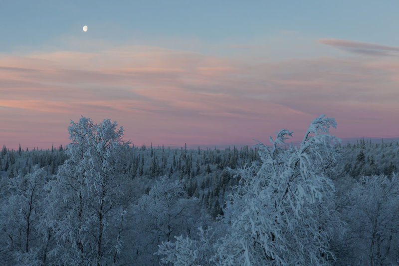 Frozen Arctic tundra in Northern Finland Arctic Beauty In Nature Dusk Finland Forest Frozen Idyllic Inari Ivalo Landscape Lapland No People Non Urban Scene Non-urban Scene Outdoors Polar Night Remote Scenics Sky Snow Sunset Taiga Tranquil Scene Tranquility Tundra