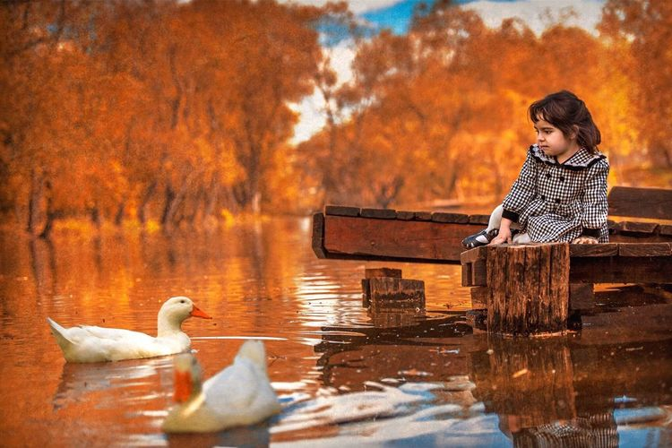 Autumn Water Nature Reflection Lake Leaf Outdoors Bird Beauty In Nature Taking Photos Threes
