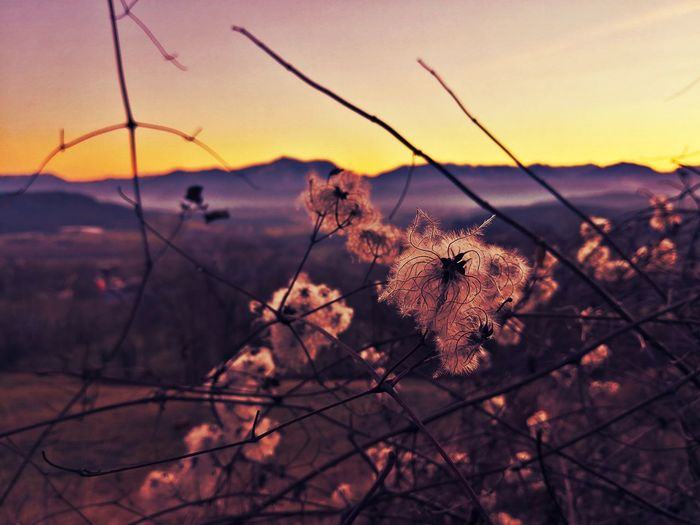 Nature Nature Photography Beauty In Nature Beautiful Nature EyeEm Selects EyeEm Nature Lover EyeEm EyeEm Best Shots - Nature Evening Light Landscape_Collection Sunset Silhouette Sky Close-up Plant Wilted Plant Dried Dried Plant Thorn Dry Branch Plant Life Spiky