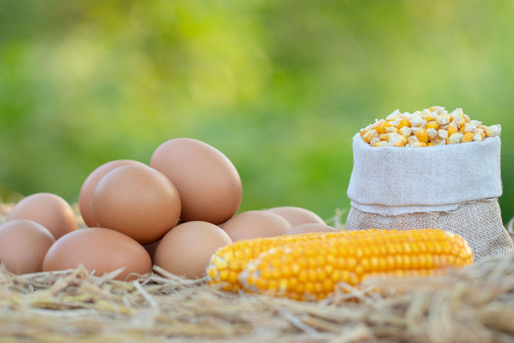 Agriculture Corn Corn On The Cob Day Egg Focus On Foreground Food Food And Drink Freshness Healthy Eating Large Group Of Objects Nature No People Outdoors Raw Food Selective Focus Still Life Sweetcorn Vegetable Wellbeing