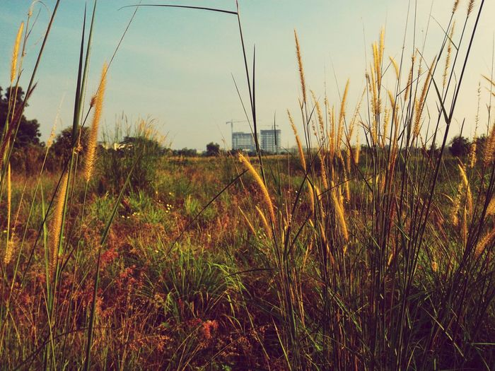 Growth Nature Plant Grass Tree Outdoors Field Sky Beauty In Nature No People Horizontal Scenics Landscape