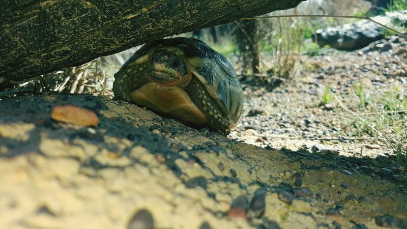 EyeEm Selects One Animal Animals In The Wild Nature Close-up Tortoise Shell Biodiversity