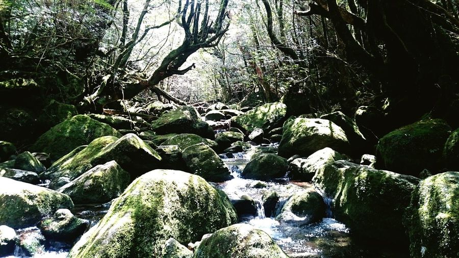 Nature Outdoors Beauty In Nature Forest Tree Relaxing Enjoying Life Quality Time 屋久島 (Yakushima Of The World Natural Heritage)もののけ姫