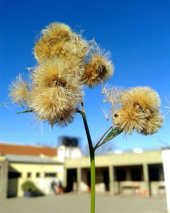 Macro_collection Macro Macro Photography PhonePhotography Phone Photography Argentina Photography Naturaleza Naturaleza🌾🌿 Plant Beauty In Nature Nature