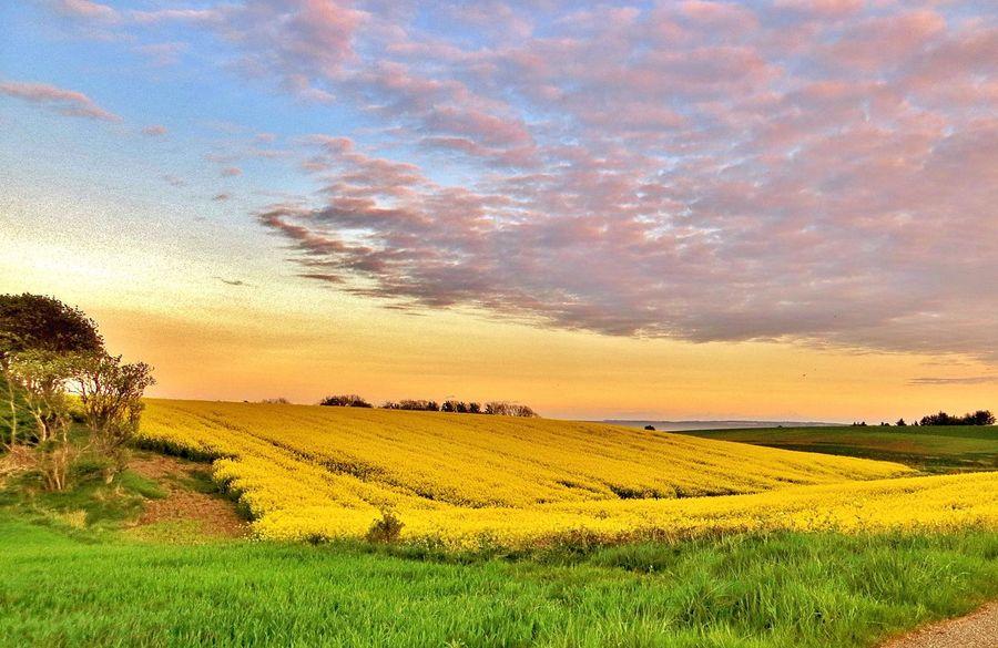 Afternoon light. Enjoying Nature Denmark Tadaa Community EyeEm Sunset.