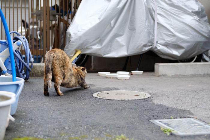 FUJIFILM X-T2 Japan Japan Photography Animal Themes Cat Fujifilm Fujifilm_xseries Kitty Cat Mammal One Animal Stray Cat Straycat X-t2 にゃんこ ねこ のらねこ部 猫 野良猫