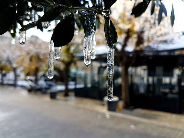 Focus On Foreground Close-up No People Outdoors Ice Beauty In Nature Nature Day Water Hanging Cold Winter Athens Athens, Greece Fragility Freshness Cold Days EyeEm Diversity