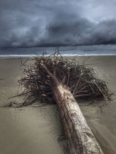 Dead Tree Scenic Cloud - Sky Beach Sand Nature Sea Horizon Over Water Outdoors Sky Beauty In Nature Scenics Landscape Storm Clouds Waterfront Scenery Backgrounds Oregon Coast Stormy Weather Shore The Great Outdoors - 2017 EyeEm Awards Perspectives On Nature