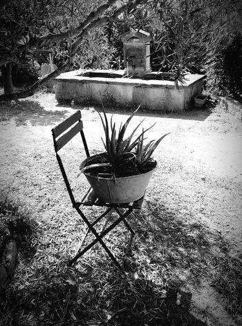 Noir Et Blanc Blackandwhite Provence Côte D'Azur Grimaud Relaxing Garden Fontain Plant Decoration With Flowers Garden Decor Relax Zen
