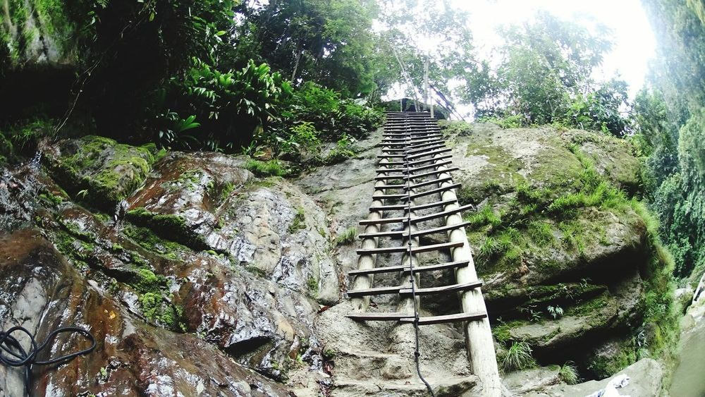 Steps Tree Day Steps And Staircases Outdoors No People Staircase Nature Growth Footbridge Beauty In Nature Sky Peru Jungle Forest Trekking Hikking
