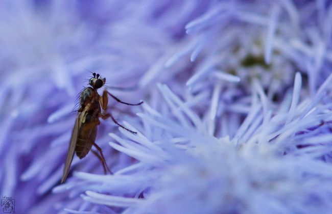 Nature Moustique EyeEm Nature Lover Eyemphotography Eyem Nature Lovers  Nature Photography Nature_collection Insect Nikon D3200 Tamron90mm ©Floriane F. Auxerre France Macro Macro_collection Macro Photography Macroclique