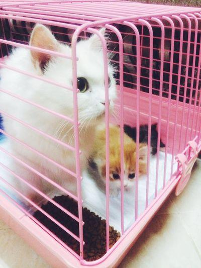 Cute Cat's😻