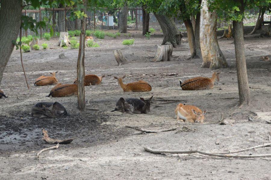 Animal Themes Tree Deers Deer Fawn