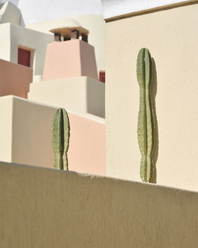 Close-up of cactus growing against wall