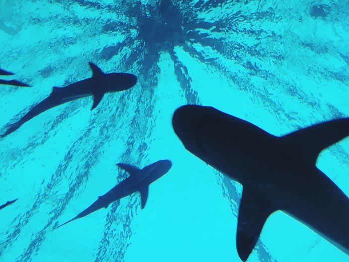Sharks! Nature
