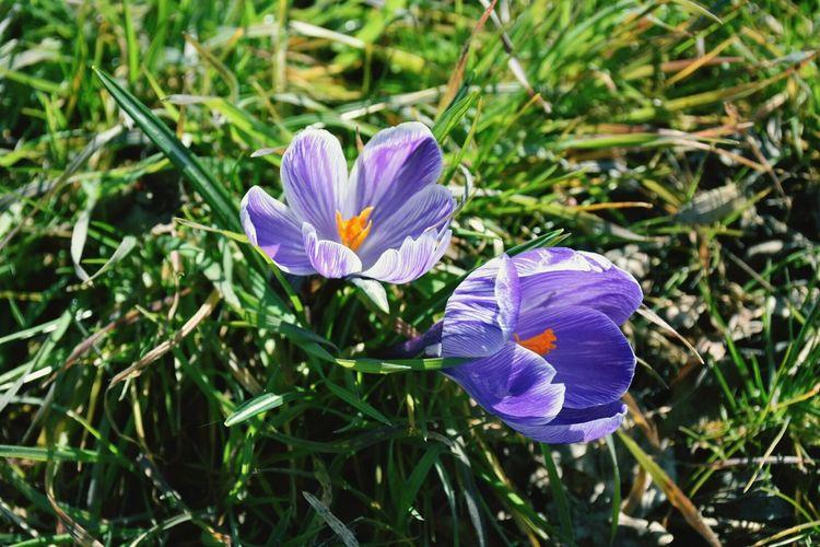 Flowers, Nature And Beauty Purpleflowers