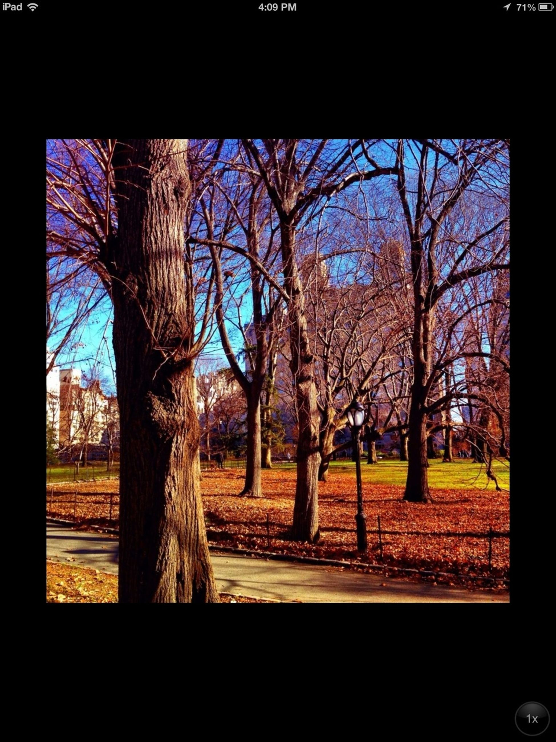 tree, bare tree, branch, tree trunk, transfer print, auto post production filter, park - man made space, growth, nature, tranquility, sky, park, built structure, building exterior, tranquil scene, day, architecture, silhouette, landscape, field