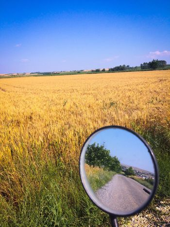 Bike ride ✌🏻 Field Landscape Growth No People Agriculture Nature Clear Sky Scenics Day Grass Mirror Sky Outdoors Tree Check This Out Taking Photos View Blue Yellow